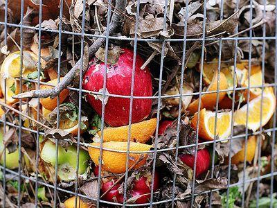 Giornata Nazionale dell'Alimentazione alla FAO. Non sprecare cibo è imperativo